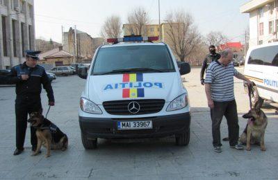 politia teleorman