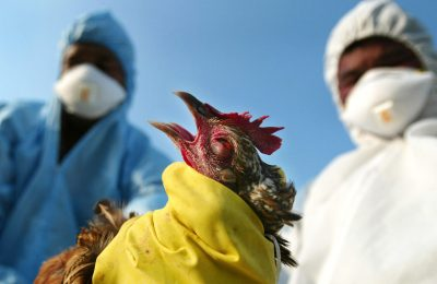 gripa aviară
