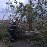 Circulație blocată pe DJ503 și 504 din cauza unor copaci căzuți pe carosabil